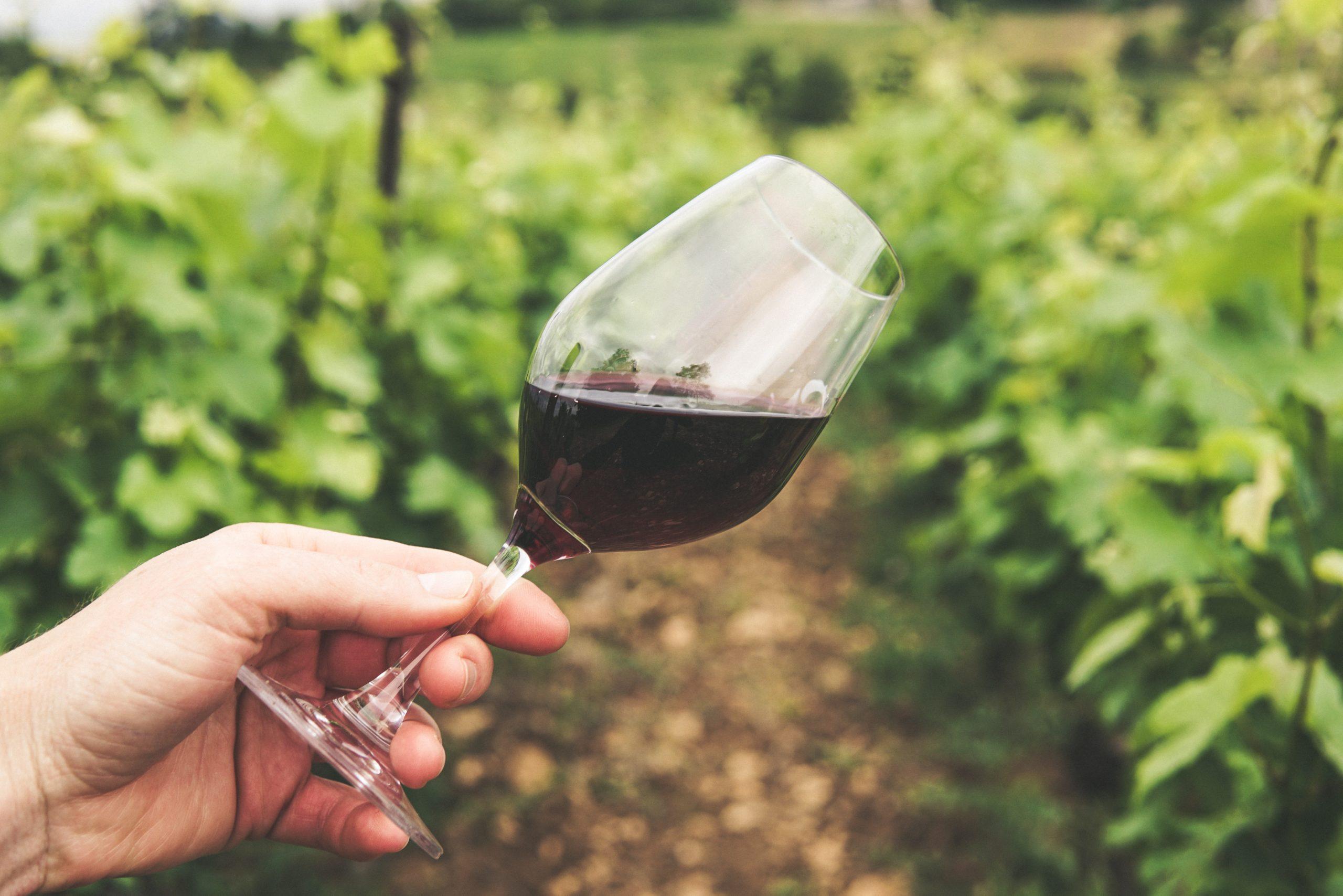 Les vins à boire avec du Brillat Savarin ?